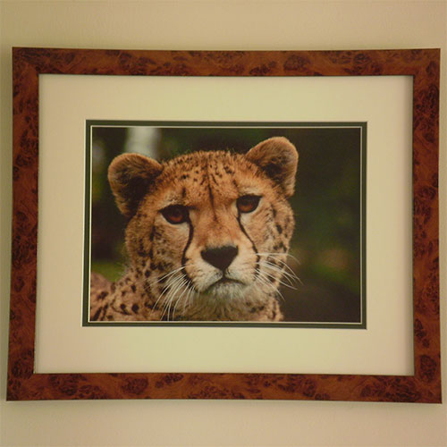 Cheetah in cherrywood frame